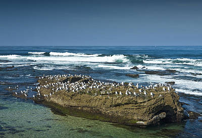 Randall Nyhof Royalty Free Images - Surf Waves at La Jolla California with Gulls perched on a Large Rock No. 0194 Royalty-Free Image by Randall Nyhof