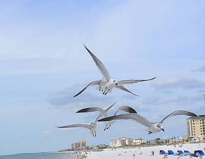 Surfing Party At Clearwater Beach Art Print
