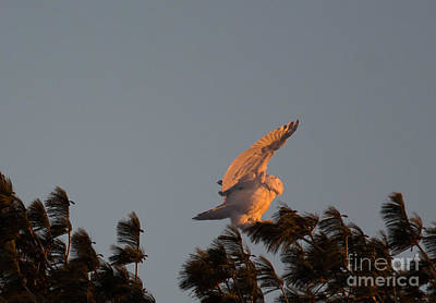 Photograph - Surfing The Tree Tops by Cheryl Baxter