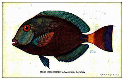 Digital Art - Surgeonfish 1932 Vintage Postcard by Audreen Gieger