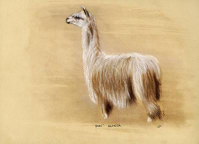 Suri Alpaca Art Print by Sara Cuthbert