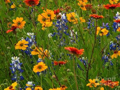 Wild Flowers Of Texas Photograph - Surprise Visit by Joe Jake Pratt