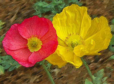 Photograph - Surprised Poppies by Ben and Raisa Gertsberg