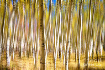 Photograph - Surreal Aspen Tree Abstract by James BO Insogna