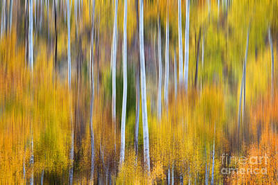 Surrealism Royalty-Free and Rights-Managed Images - Surreal Aspen Tree Magic Abstract Art by James BO Insogna