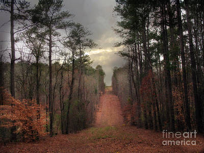 Nature Scene Photograph - Surreal Autumn Fall South Carolina Tree Landscape by Kathy Fornal