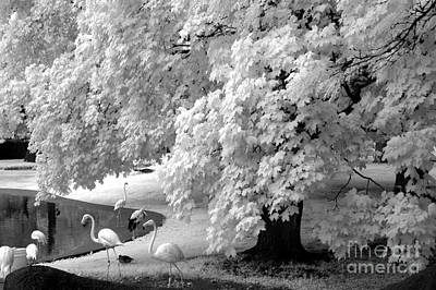 Surreal Black White Infrared Flamingo Nature Scene Art Print by Kathy Fornal