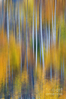 Surrealism Royalty-Free and Rights-Managed Images - Surreal Colorful Aspen Tree Magic Abstract by James BO Insogna