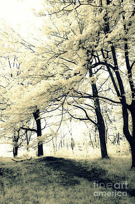 Photograph - Surreal Dreamy Fantasy Nature Trees Yellow Spring Landscape by Kathy Fornal