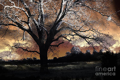 Surreal Landscape Photograph - Surreal Fantasy Gothic Trees Nature Sunset by Kathy Fornal