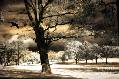 Surreal Infrared Sepia Nature Photograph - Surreal Fantasy Infrared Trees Raven Landscape  by Kathy Fornal