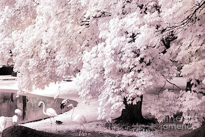 Photograph - Surreal Fantasy Pink Flamingo Infrared Park by Kathy Fornal