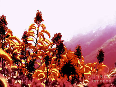 Surrealism Royalty-Free and Rights-Managed Images - Surreal Flowers by Mark Van Martin