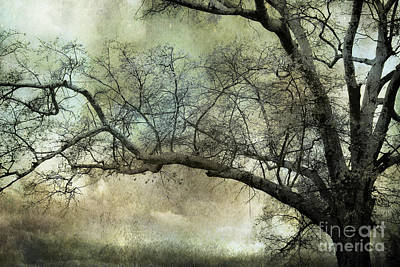 Autumn Landscape Photograph - Surreal Gothic Dreamy Trees Nature Landscape by Kathy Fornal