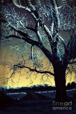 Surreal Gothic Fantasy Blue Tree Nature Sunset  Art Print by Kathy Fornal