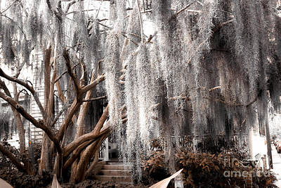 Savannah Fine Art . Savannah Old Trees Photograph - Surreal Gothic Savannah House Spanish Moss Hanging Trees - Savannah Sepia Brown Moss Trees by Kathy Fornal