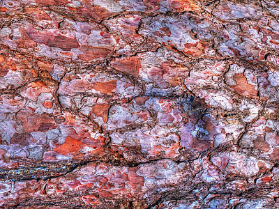 Photograph - Surreal Patterned Bark 2 by Gill Billington