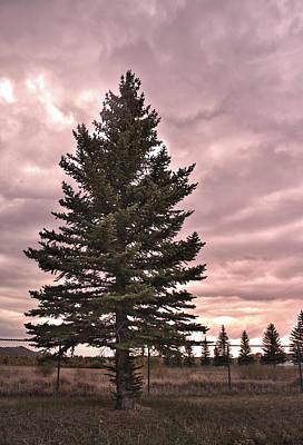 Surrealism Royalty Free Images - Surreal Pine Tree Royalty-Free Image by Richard Malin