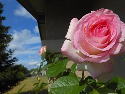 Surreal Rose Art Print