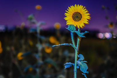 Surreal Summer Sunflower Sprout Art Print