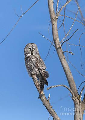 Ggo Photograph - Surveillance  I'm Watching by Nicole  Cloutier Photographie Evolution Photography