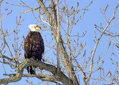 Photograph - Surveying His Domain by Peggy King