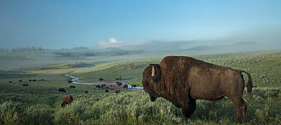 Bison Photograph - Surveying His Kingdom by Sandy Sisti