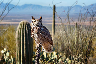Photograph - Surveying The Sonoran by Kathleen Bishop