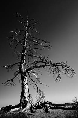 B Photograph - Survival Tree by Chad Dutson