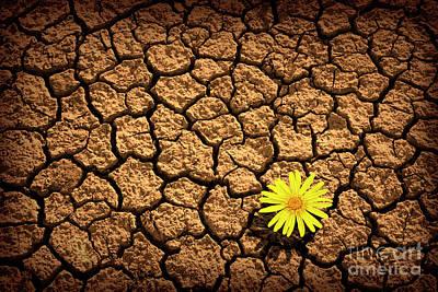 Survivor Art Print by Carlos Caetano