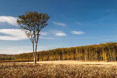 Big Tree Photograph - Survivor by Davorin Mance