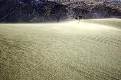 Death Valley Photograph - Survivor In A Death Valley Sand Storm by John Aydelotte