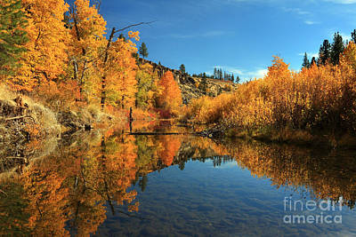Photograph - Susan River 11-3-12 by James Eddy
