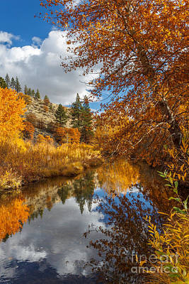 Photograph - Susan River Autumn Reflections by James Eddy