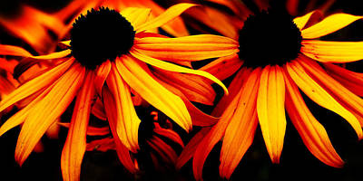 Susans On Fire Art Print