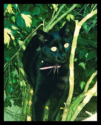 Photograph - Susie In Tree by Joan-Violet Stretch