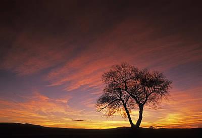 Photograph - Susies Tree by Doug Davidson