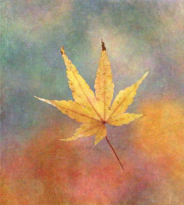 Vogel Wall Art - Photograph - Suspended Leaf by Angie Vogel