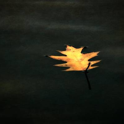 Autumn Leaf On Water Photograph - Suspended by Michelle Calkins