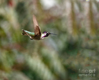 Photograph - Suspended by Robert Bales