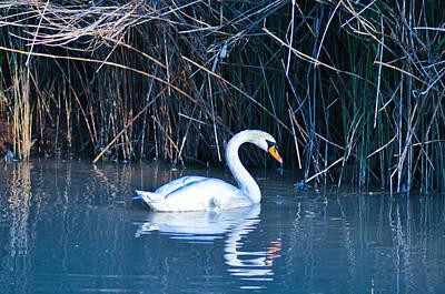Suwannee River Photograph - Suwannee River by Bill Cannon