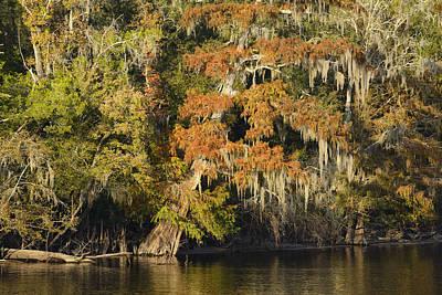 Suwannee River Photograph - Suwannee River by Christian Heeb