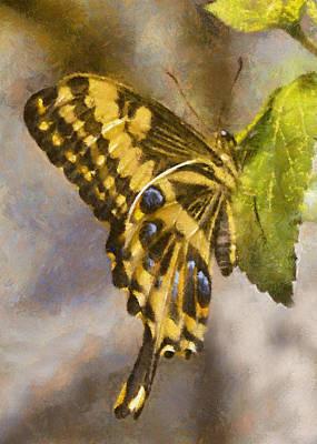 Digital Art - Swallowtail  Butterfly by Charmaine Zoe