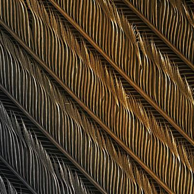 Swallow Feather Detail, Sem Art Print by Power And Syred