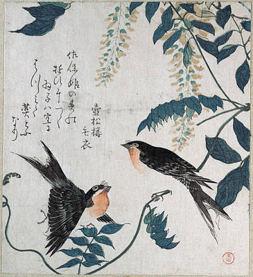 Swallow Drawing - Swallows And Wisteria by Kubo Shunman