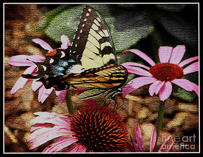 Photograph - Swallowtail / Butterflies by James C Thomas