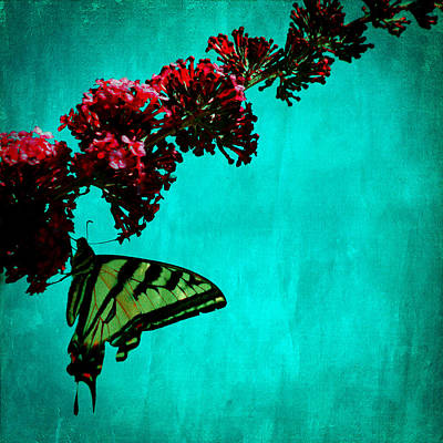 Buddleia Photograph - Swallowtail Butterfly by Bonnie Bruno
