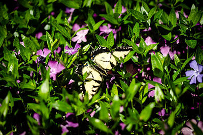 Photograph - Swallowtail Butterfly by Crystal Wightman