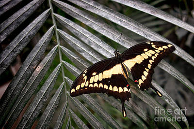 Swallowtail Butterfly Art Print by Olivier Le Queinec