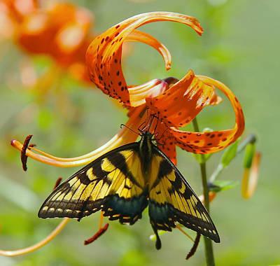 Swallowtail Butterfly3 Art Print